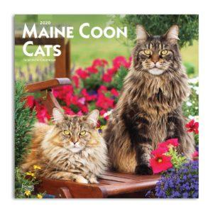 Fronte calendario gatti maine coon 2020