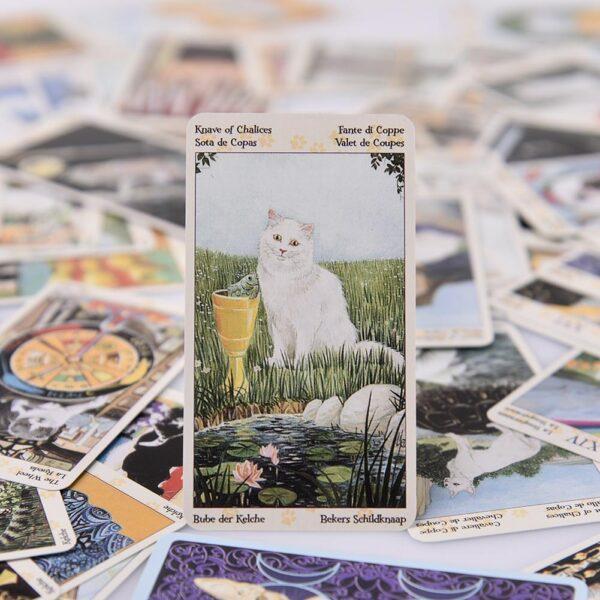Tarocchi con gatti, dettaglio 04
