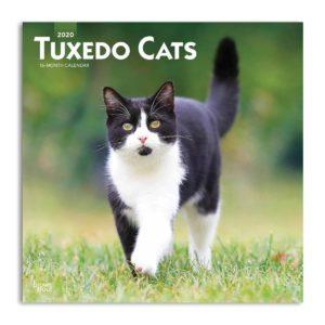 Fronte calendario gatti bianchi e neri 2020